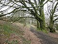 Bridleway, below North Hill - geograph.org.uk - 1774201.jpg