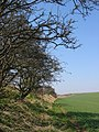 Bridleway To East Heslerton Wold - geograph.org.uk - 378453.jpg