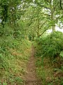 Bridleway between Haddon and Burton Woods - geograph.org.uk - 892486.jpg