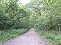 Bridleway onto Black Heath - geograph.org.uk - 460642.jpg