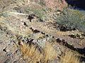 Bright Angel Pueblo.JPG
