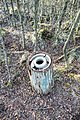 Broken kist containing hoard in Galloway Forest Park - panoramio.jpg