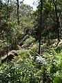 Budj Bim ‐ Mt Eccles National Park, Victoria, Australia 32.jpg