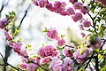 Bunches-blossom-spring (Unsplash).jpg