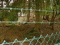 Burg Braunshorn aus Nordosten.jpg