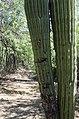 Butcher Jones Trail, Burro Cove and Beyond, Tonto National Park, Arizona - panoramio (18).jpg