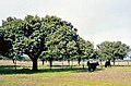 Cáceres (provincia) 1978 04.jpg