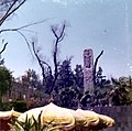 CDMX Marzo 1974 - MNA Stela de Quirigua.jpg