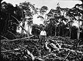 COLLECTIE TROPENMUSEUM Man temidden van omgekapte bomen; mogelijk ontginning voor rubberplantage, Oost-Sumatra. TMnr 60005310.jpg