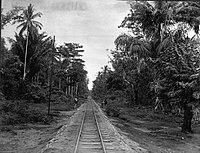 COLLECTIE TROPENMUSEUM Spoorweg door de bossen bij bivak Gendong TMnr 60011316.jpg