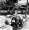 COLLECTIE TROPENMUSEUM Tijdens een dodenfeest in kampong Sadang Celebes wordt het bloed van een pas geslachte karbouw in bamboekokers opgevangen TMnr 10003210.jpg