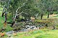 CSIRO ScienceImage 4596 Stream near Birdwood on road to Mount Pleasant SA.jpg