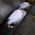 Cadavers (2678935636).jpg