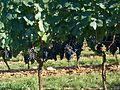 Cahors 2011 08 036.jpg
