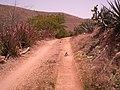 Camino En El Cerro - panoramio.jpg