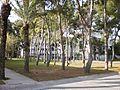 Campus UA 08.JPG
