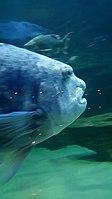 Cape Aquarium 20180719 211909 (16).jpg