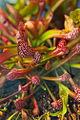 Carnivorous Plant 2 FF2009 11 06.JPG