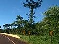 Cascavel - State of Paraná, Brazil - panoramio - LUIS BELO (18).jpg