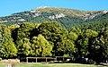Castaños, pinos y piornos (31694745047).jpg