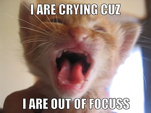 Lolcat from :Image:Cat crying.jpg Text ideated...