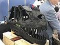 Ceratosaurus skull.jpg