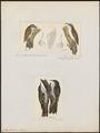 Certhia familiaris - 1700-1880 - Print - Iconographia Zoologica - Special Collections University of Amsterdam - UBA01 IZ19200355.tif