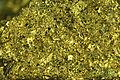 Chalcopyrite 1.85 Ga; 153 Orebody, Coleman Mine, Sudbury.jpg