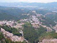 Cherry blossoms at Yoshinoyama 02.jpg