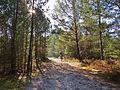 Chevauchée en forêt de Fontainebleau.jpg