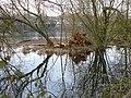 Chilham Lake - geograph.org.uk - 340938.jpg