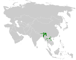 Chleuasicus atrosuperciliaris distribution map.png
