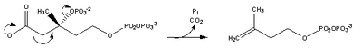 Cholesterol-Synthesis-Reaction6.png