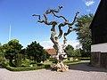 Ciekawe drzewo - panoramio.jpg