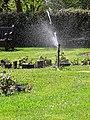 City of London Cemetery Memorial Garden sprinkler 3.jpg