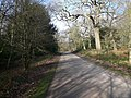 Clumber Park - Heading for Hardwick but looking back to Crossroads - geograph.org.uk - 683135.jpg