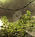 Cobweb by Cradley Brook - geograph.org.uk - 974605.jpg