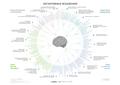 Cognitive biases diagram RU.png