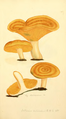 Coloured Figures of English Fungi or Mushrooms - t. 202.png