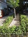 Comienza la segunda fase de rehabilitación de las zonas verdes del Parque de las Avenidas 05.jpg