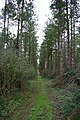 Coniferous wood at the top of Up End track - geograph.org.uk - 707300.jpg