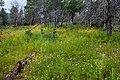 Continental Divide Trail - Flickr - aspidoscelis (40).jpg