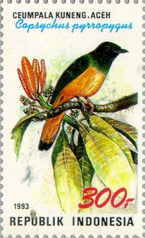 Description de l'image Copsychus pyrropygus 1993 Indonesia stamp.jpg.