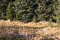 Corshellock - geograph.org.uk - 594792.jpg