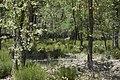 Corzos - panoramio (2).jpg