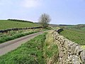 Country Road - geograph.org.uk - 419151.jpg