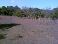 Countryside in El Salvador & a Shadow.png