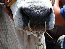acheter maintenant meilleur endroit pour élégant et gracieux Mouchette (ustensile agricole) — Wikipédia