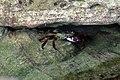 Crab finds shelter (6226040276).jpg