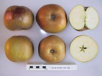 Cross section of Acklam Russet, National Fruit Collection (acc. 1961-043).jpg